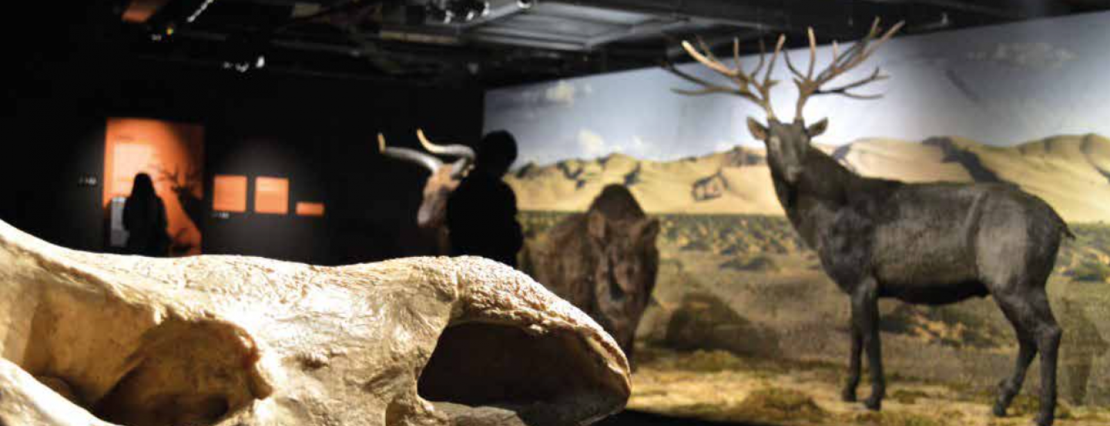 MAMMOTHS – GIANTS OF THE ICE AGE